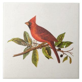Azulejo De Cerámica Ilustracion cardinal del pájaro de la canción del