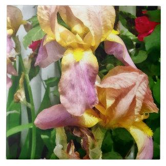 Azulejo De Cerámica Iris por la valla de estacas