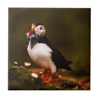 Azulejo De Cerámica Isla animal de Atlántico de la fauna del pájaro de
