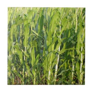 Azulejo De Cerámica Las plantas de maíz verde están creciendo en