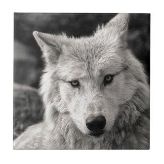 Azulejo De Cerámica Lobo blanco y negro