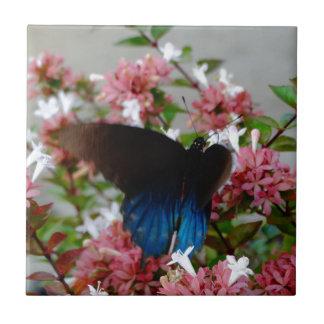 Azulejo De Cerámica Mariposa azul y negra en las flores rosadas