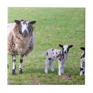 Azulejo De Cerámica Mime a las ovejas con dos corderos recién nacidos
