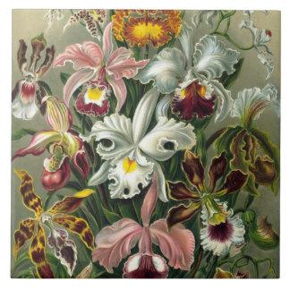 Azulejo De Cerámica Orquídeas de la bella arte - formas de arte de la
