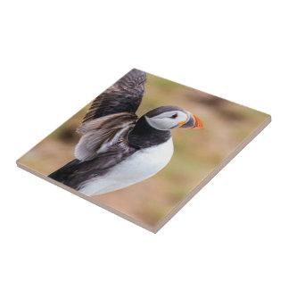 Azulejo De Cerámica Pájaro del frailecillo