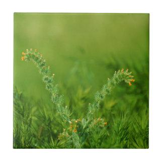 Azulejo De Cerámica Planta silvestre verde