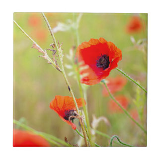 Azulejo De Cerámica Tiro blando de amapolas rojas en el campo