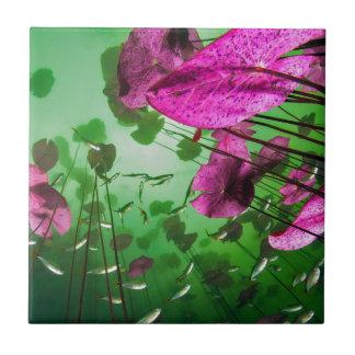 Azulejo De Cerámica vista subacuática del cenote de Aktun ha cerca de