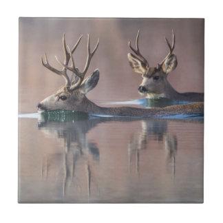 Azulejo De Cerámica Wyoming, el condado de Sublette, dólares del