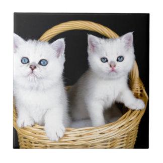 Azulejo Dos gatitos blancos en cesta en background.JP