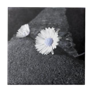 Azulejo Dos margaritas blancas que mienten en la piedra en