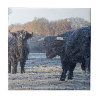 Azulejo Dos montañeses escoceses negros en prado congelado