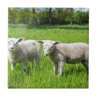 Azulejo Dos ovejas holandesas blancas en prado verde de la