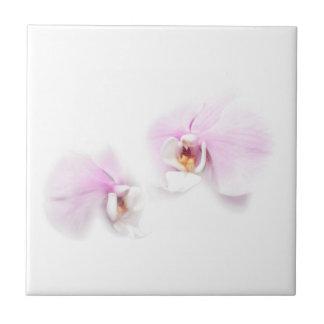 Azulejo Dúo de la flor del labio de Hilo del Phalaenopsis