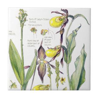 Azulejo El Wildflower de las orquídeas de señora