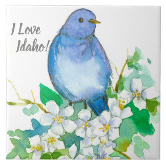 Azulejo Estado del Bluebird de la montaña del Syringa de