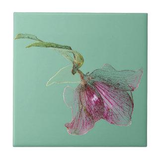 Azulejo Flor del Hellebore en la turquesa de la verde