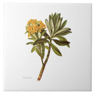 Azulejo Flores de la ciencia NZ del vintage - huntii del