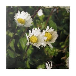 Azulejo Flores de la margarita blanca en fondo verde