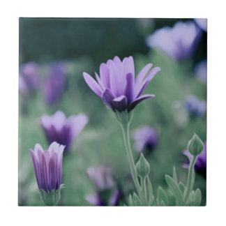 Azulejo Flores púrpuras delicadas de la lavanda