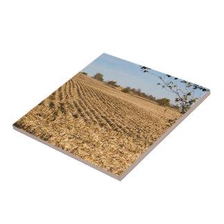 Azulejo Foto del panorama del campo de maíz de Iowa en la