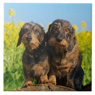 Azulejo Foto linda del mascota de dos de los Dachshunds de