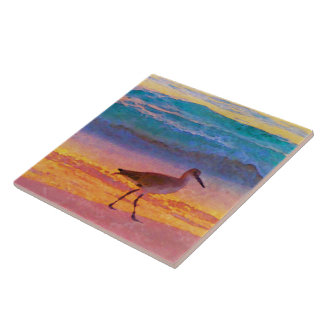 Azulejo lavandera en la playa en la puesta del sol