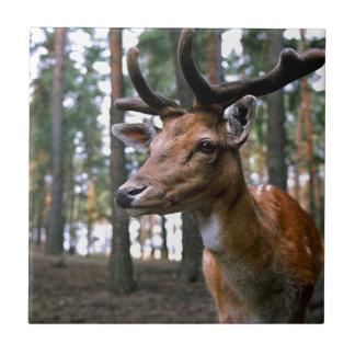 Azulejo Los ciervos de Brown acercan a árboles