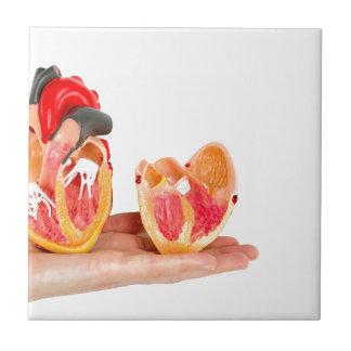 Azulejo Mano con el modelo humano del corazón en
