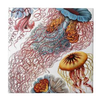 Azulejo Medusas de Ernst Haeckel, Discomedusae del vintage