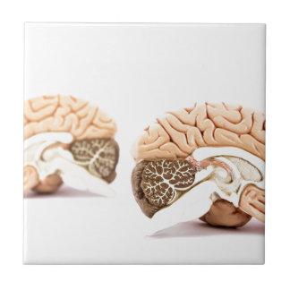 Azulejo Modelo de los cerebros humanos aislado en el fondo