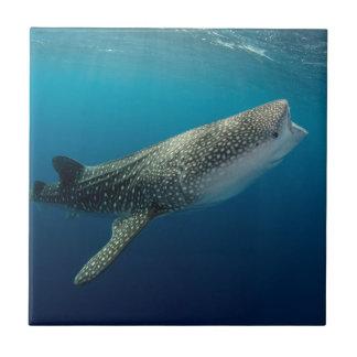 Azulejo Natación del tiburón de ballena