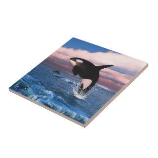 Azulejo Orcas en el Océano ártico