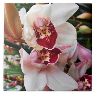 Azulejo Orquídea blanca y rosada del Phalaenopsis