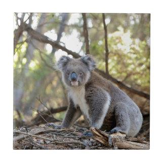 Azulejo Oso de koala gris y blanco
