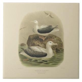 Azulejo Pájaros de la ciencia NZ del vintage - albatros