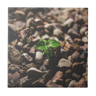 Azulejo Planta frondosa verde que comienza a crecer en los