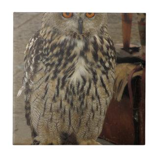 Azulejo Retrato del búho largo-espigado. Otus del Asio,