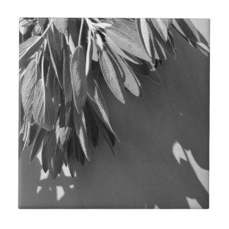 Azulejo Sabio clásico - blanco y negro