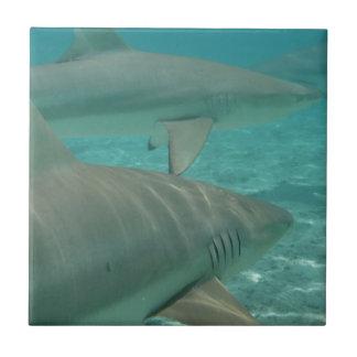 Azulejo shark