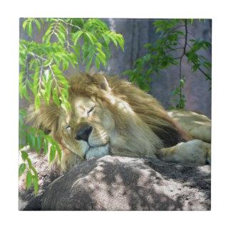 Azulejo siesta del león