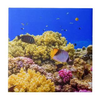 Azulejo Un arrecife de coral en el Mar Rojo cerca de