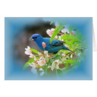 Azules del empavesado de añil tarjeta de felicitación