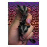 Baby Sugar Gliders Card Expecting Twins Card