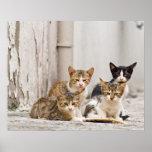 Backstreet Boys - gatos del bebé en la calle de Ib Poster