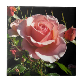 Baldosa cerámica color de rosa coralina azulejo cuadrado pequeño