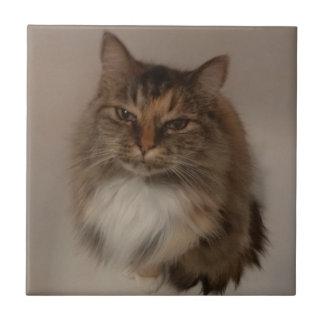 Baldosa cerámica del gato de calicó