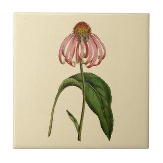 Baldosa cerámica del moreno botánico rosado del
