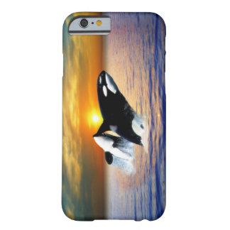 Ballenas en la puesta del sol funda de iPhone 6 barely there