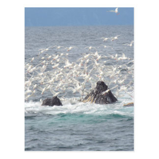 Ballenas jorobadas, gaviotas en Seward, Alaska Postal